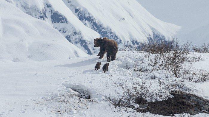 Medvede (2014)