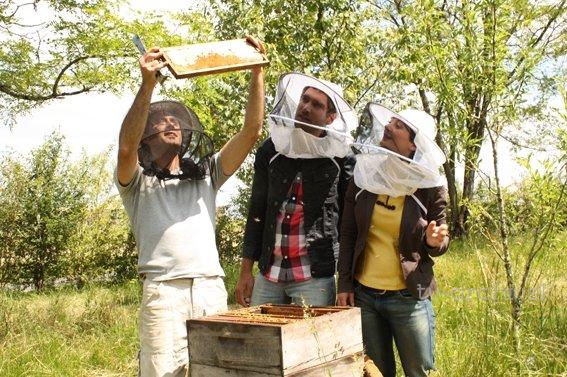 Záhada miznúcich včiel