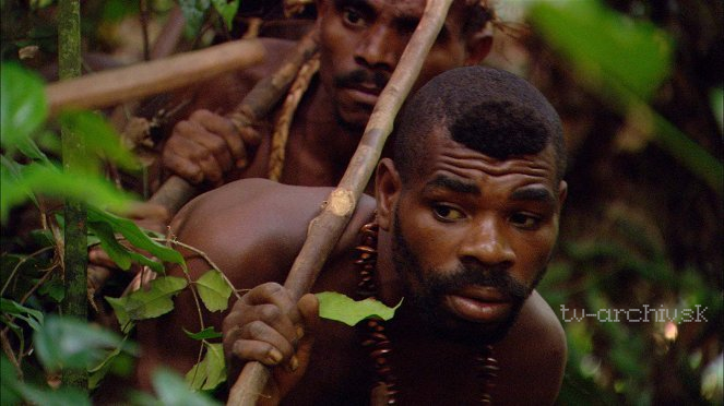 Svět Pygmejů 2011