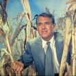 Cary Grant (Roger O. Thornhill)
