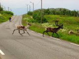 Na ceste po Laponsku