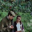 Zelená léta (1985)