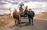 Na ceste po Madagaskaru