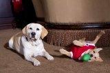 The Dog Who Saved the Holidays (2012)