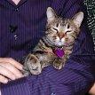 Zoznámenie s mačkami (2008)