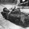 Steve Reeves (Romulus)