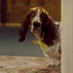 Pes menom Hubert