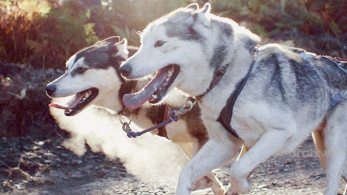 Tajný život psů II